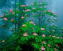 Redwood Forest Flowering mural