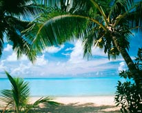 Coconut Palms Bora Bora mural
