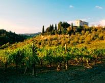 Vineyards In Tuscany Villa mural
