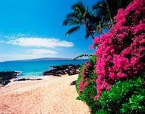 Hidden Cove South Maui Coast mural