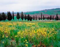 Tuscan Countryside Outside Pienza Italy mural