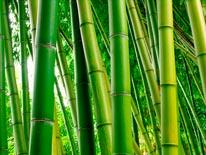 Bamboo Grove mural