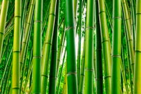 Bamboo Serenity mural