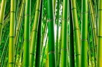 Bamboo Serenity Vinyl Wall Decal mural