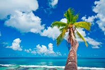 Single Palm Tree On Beach mural