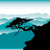 Bonsai Tree With Rollin Hills mural