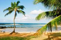 Palms And Poipu Kauai mural