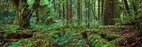 Rainforest Olympic Peninsula WA mural