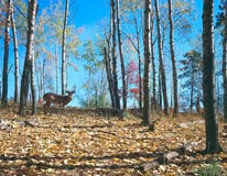 Deer 2 mural