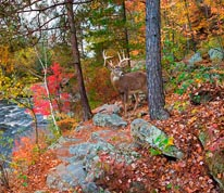 Deer-Banning State Park mural
