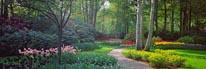Keukenhof Gardens I mural
