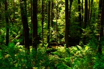 Otway Ranges Forest mural
