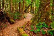 Track To Ralph Falls Mt Victoria Australia mural