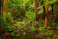 Waikoromiko Stream & Forest mural