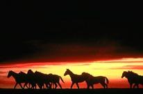 Shadow Horses mural