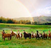 Herd Of Horses Pagosa Springs CO mural