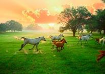 Arabian Horses And The Rising Sun mural