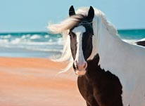 Gypsy Vanner Mare at the Beach mural