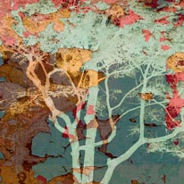 Weathered Tree-Blue mural