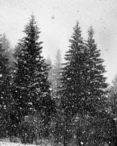 Let It Snow mural