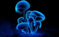 Fluorescence mural