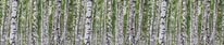 Birchwood Forest - Panoramic mural