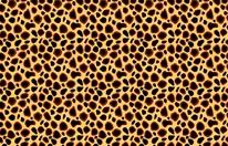 Cheetah Print mural