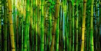 Bamboo Forest Miller mural