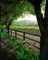 Spring In The Vineyard - Vertical mural