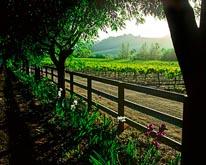 Springtime In The Vineyard mural