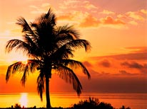 Coconut Palms At Sunrise, Sanibel Island Causeway, Florida mural