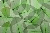 Eucalyptus 2 mural