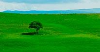 Tuscan Field mural