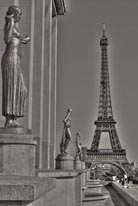Eiffel Tower - Black and White mural